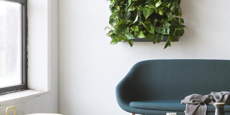 Groene vingers zijn niet nodig voor een plantenmuur in Noorse stijl. Foto Skogluft