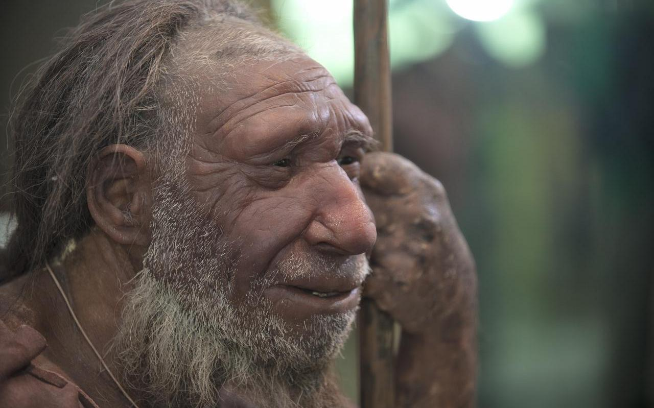 Illustratie uit het boek 'Neanderthalers in Noord-Nederland'.