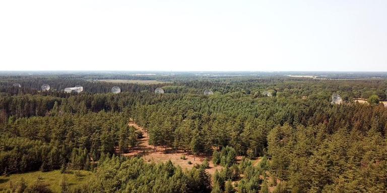 De radiotelescopen in de bossen van Westerbork. FOTO ASTRON