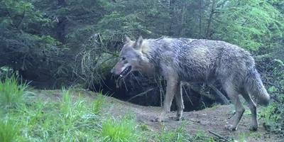 Een van de beelden, gemaakt door Staatsbosbeheer.