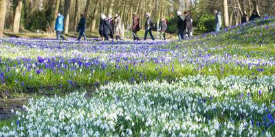 Hoewel landgoed Overcingel privé eigendom is, kan iedereen er van de bloemenpracht genieten. Foto Marcel Jurian de Jong
