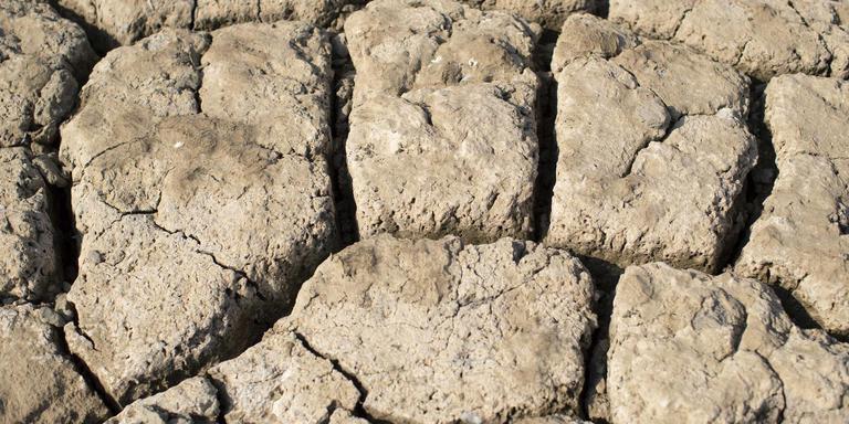 Door de droogte is de bodem ongeacht de grondsoort zo hard als asfalt. Foto ANP