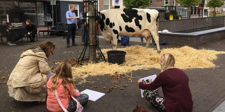 Het naaktmodel in het centrum van Hoogeveen? Een koe!
