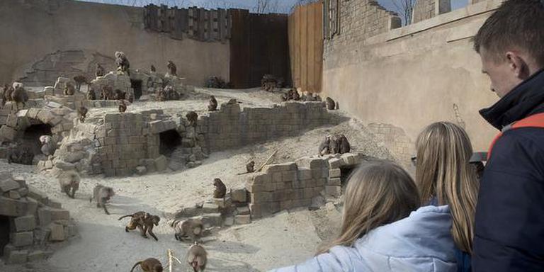 De bavianentempel in Serenga. FOTO JAN ANNINGA