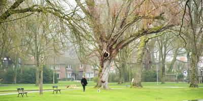 Het 100 jaar bestaande Wilhelminapark in Meppel. Foto: Marcel van Kammen