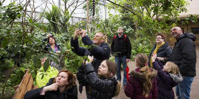 Door zich weer te presenteren als dierenpark hoopt Wildlands aantrekkelijker te worden voor bezoekers. Foto: ANP / Vincent Jannink