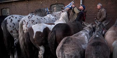 De Zuidlaardermarkt is de grootste en oudste paardenmarkt van Europa. Foto: archief DvhN