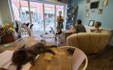 Kattenbrasserie Sam & Moos is het eerste kattencafé van Drenthe