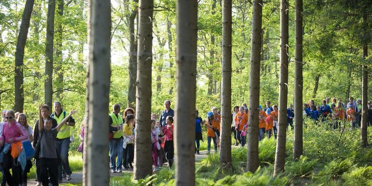 Wandelen door de bossen bij Assen. Foto Marcel Jurian de Jong