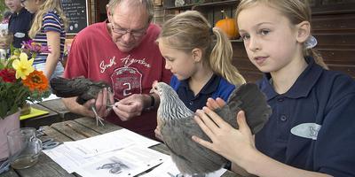 Amy (links) en Liv kijken hoe Henk Timmer hun hanen keurt.
