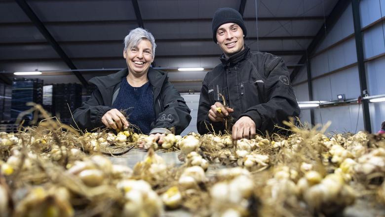 Dieneke en zoon Albert Joling van Maatschap Joling. Het bedrijf doet ook in tulpen, pioenrozen, aardbeien en afrikaantjes en verbouwt daarnaast nog wat suikerbieten. In totaal boeren de Jolings op 300 hectare. Foto's MARCEL JURIAN DE JONG