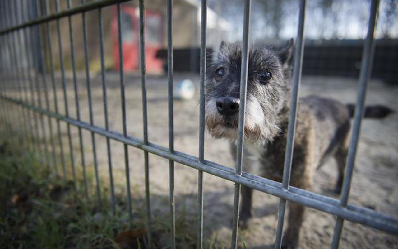 Een hondje in het asiel in Beilen.