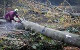 Staatsbosbeheer verbiedt bomenkap na ongelukken