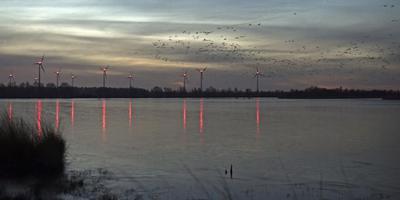 Ganzen maken zich los van de plassen in het Bargerveen. Op de achtergrond Duitse windmolens. FOTO BOUDEWIJN BENTING