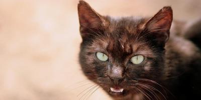 De kat op de foto is niet Zorro de snelwegkat.