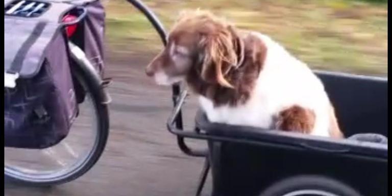 Droes in zijn fietskar.
