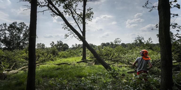 Een 52-jarige Emmenaar wil na 17 jaar bijstand graag werken in de bosbouw. Archieffoto Kees van de Veen