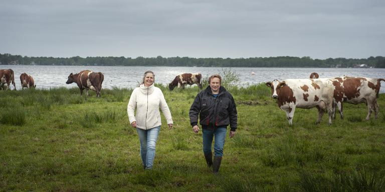 Veehouders Woldring uit Haren tussen hun Fries Roodbont. Foto Reyer Boxem