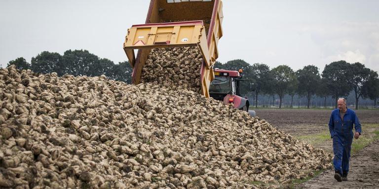 Suikerbietenoogst bij Brandsma in Scheemda. Foto: Huisman Media