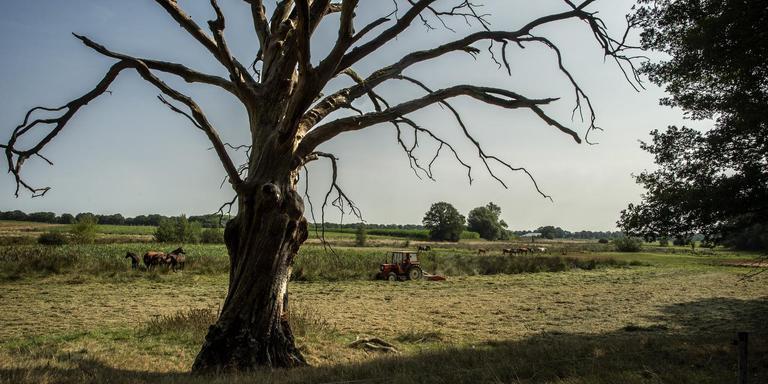 Landschap in Westerwolde Foto: Duncan Wijting