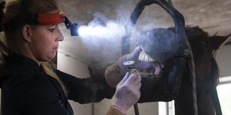 """Paardentandarts Sanne Olde Olthof: ,,Ik kom zo veel schrijnende gevallen tegen."""" Foto: Reyer Boxem"""