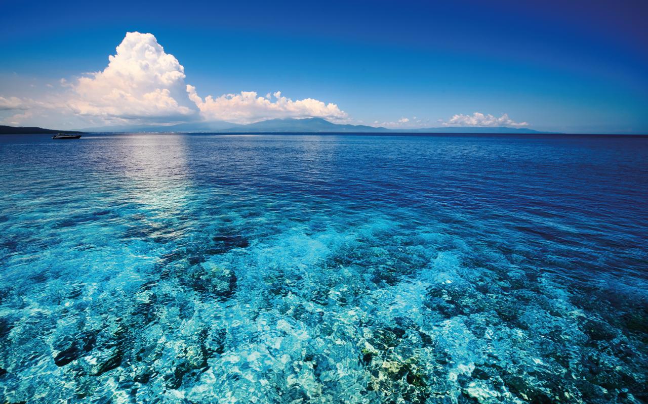 In Beeld: Het koraalrif verbleekt