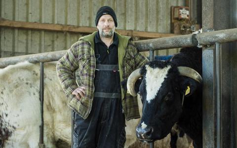 Het koeienparadijs aan de Leemweg (+video)