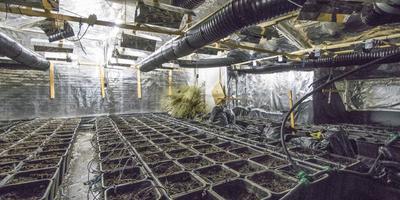 In Opende werd dinsdag een hennepkwekerij ontmanteld die was gevestigd in een bedrijfspand aan de Provincialeweg. Foto: De Vries Media