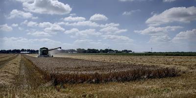 Boer Slim ploegt gewoon door en oogst het graan op het veld.