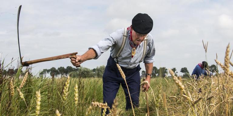 De 71-jarige Jan Kool uit Baflo zicht het graan in de kleren van zijn vader. Foto Liselotte Schüren