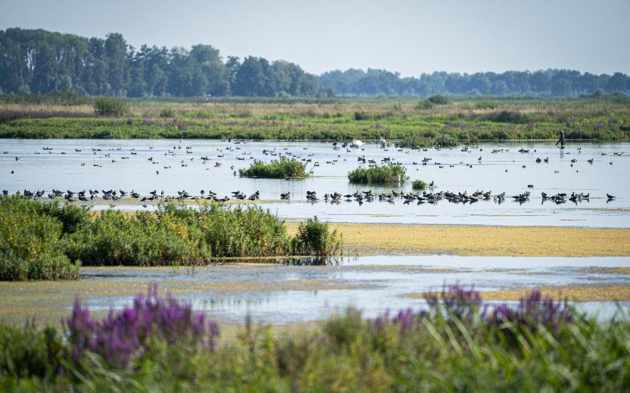 De nieuwe natuur van De Onlanden tussen Peize en Groningen.