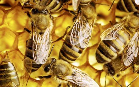 Nog veel steun nodig voor bijen-app