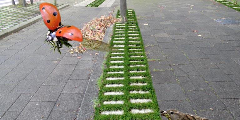 Groene bestrating is niet alleen goed voor de afvoer van water en het koelen van de stad, maar ook voor insecten en vogels. Fotobewerking: Martin Borchert