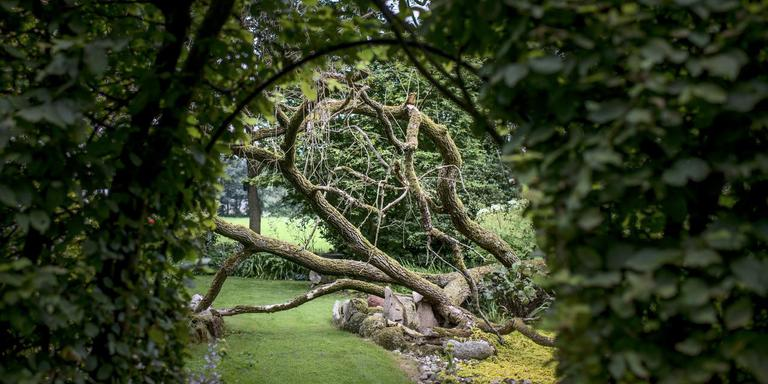 De tuin. FOTO CORNÉ SPARIDAENS