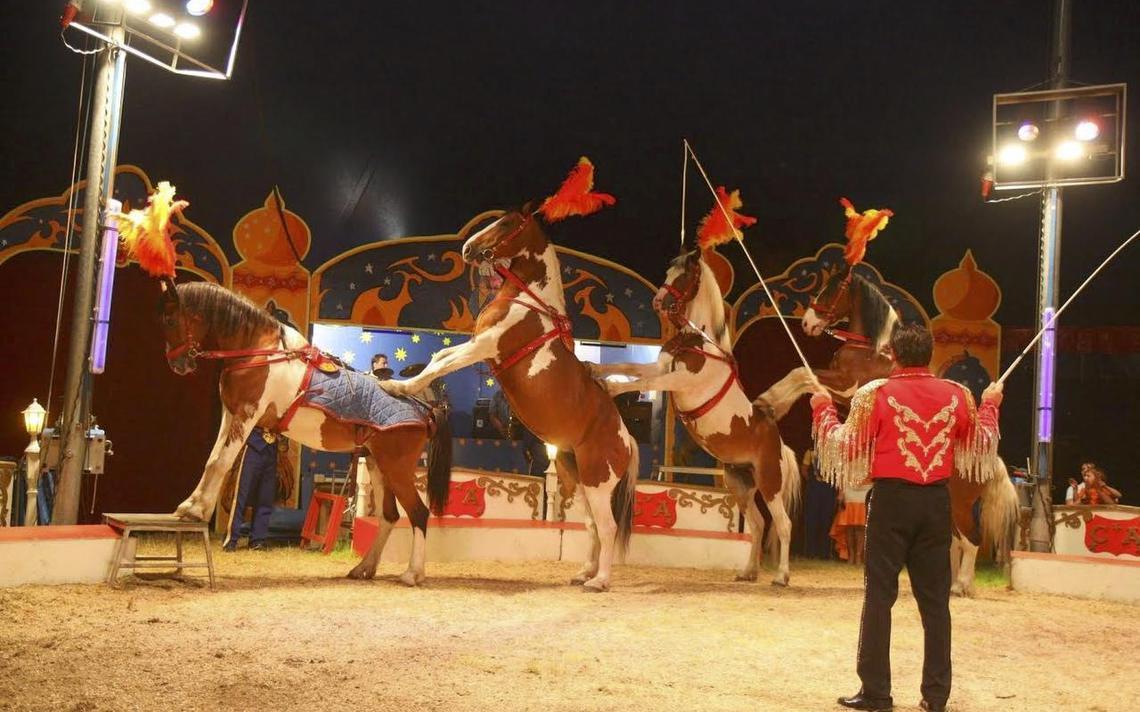 Duitse circussen komen naar Groningen Groningen DVHN nl