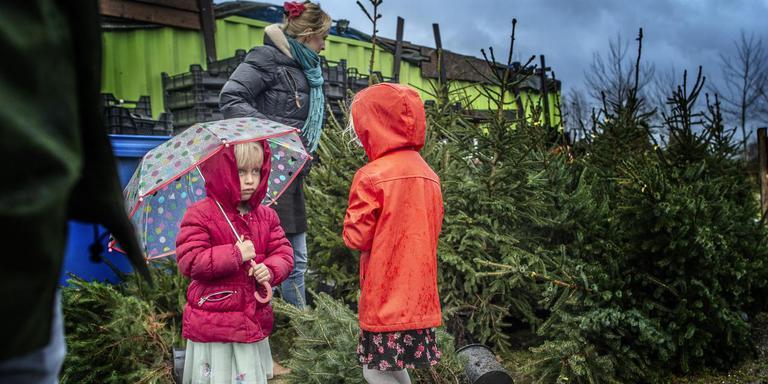 Louise en Lidewij zoeken met hun moeder Marike Visser in de regen een kerstboom uit. Foto: Duncan Wijting
