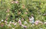 Rosarium zoekt Rosa voor jubileum