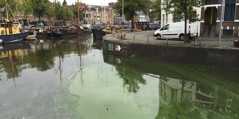 Blauwalg in de Noorderhaven. FOTO DVHN/ROELOF VAN DALEN
