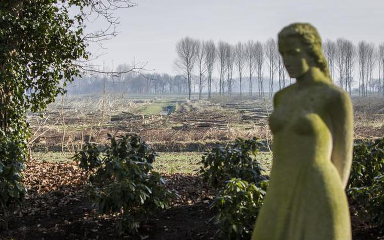 Een kwart eeuw geleden maakten in Oost-Groningen veel boeren gebruik van een regeling die de productie van hout stimuleerde. Nu worden veel van die bossen gekapt. FOTO HUISMAN MEDIA