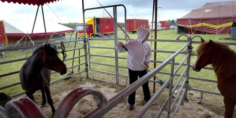 dieren circus die nog mogen