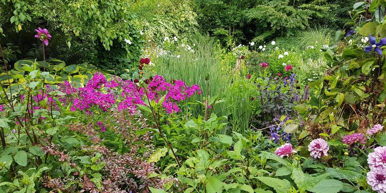 Een deel van de tuin van Martien Vossen, voorzitter van Groei & Bloei.