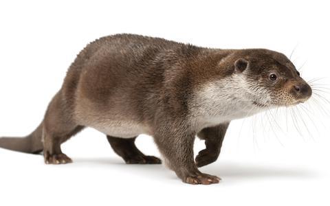 Dit is het jaar van de otter | In Beeld
