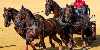 Paardensport stapt af van gecombineerd WK