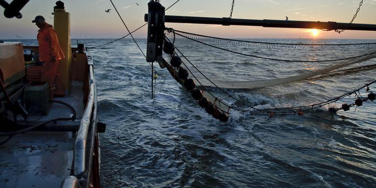 Opkoop garnalenvissers: 10 miljoen euro