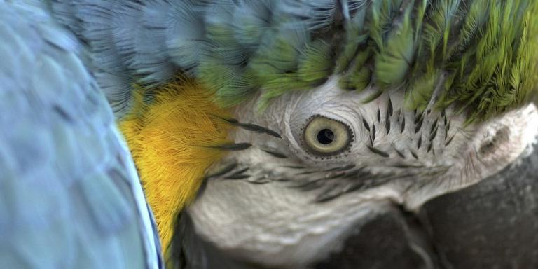 Een 19-jarige stagiair van de papegaaienopvang in Erica stond dinsdag voor de rechter.