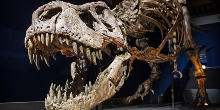 Drukte in Naturalis om T-rex