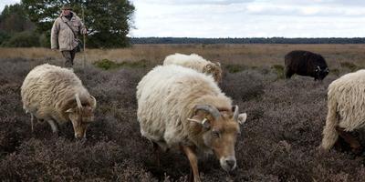 Het Dwingelerveld is een van de vele natuurgebieden die lijden onder overbemesting door stikstofverbindingen.