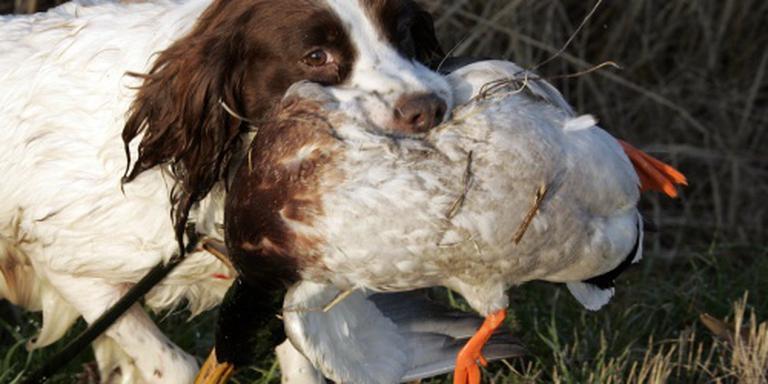Natuurmonumenten wil jachtverbod wilde eend