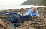 Sir David Attenborough luidt de noodklok over de klimaatverandering: De natuur is doodziek