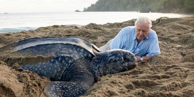 David Attenborough bij een schildpad op het strand. Foto: AFP/Mandel Ngan